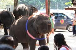 Ayutthaya_Thailand (62)