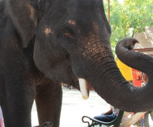 Ayutthaya_Thailand (64)