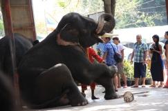 Ayutthaya_Thailand (66)